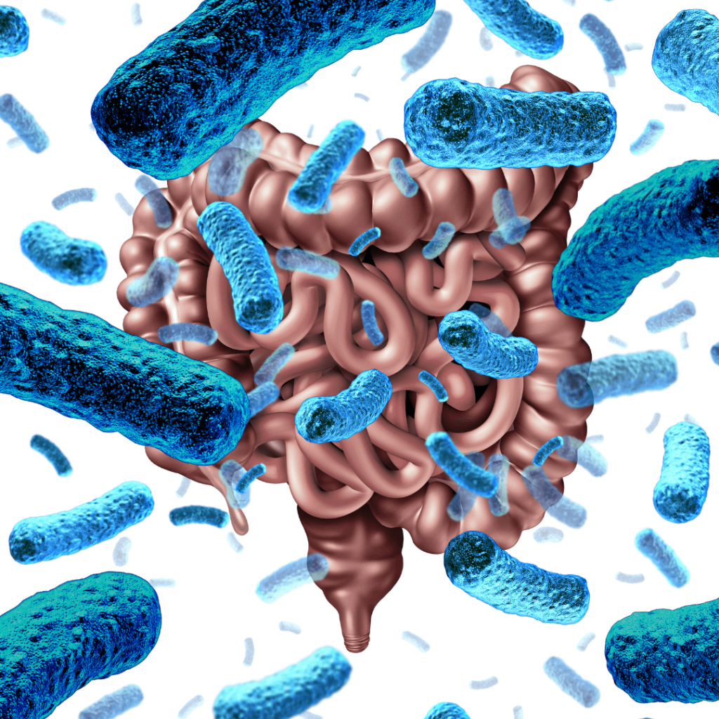 intestines with blue bacteria