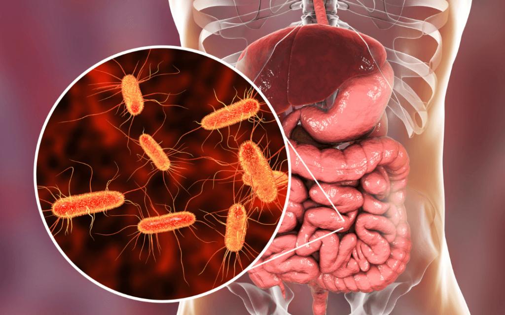 microscopic bacteria in intestines