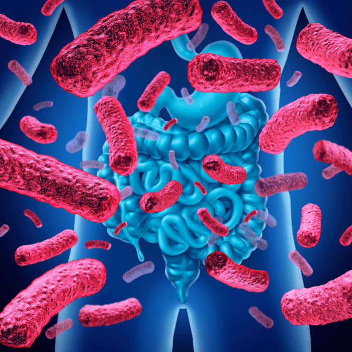 blue image of person with intestines showing with red rod bacteria bacilli